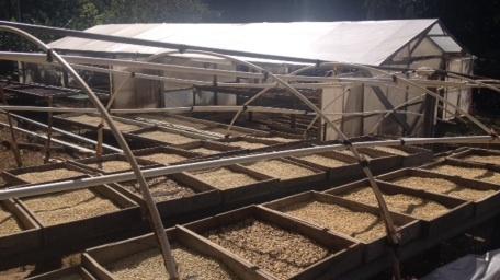 Hier werden die Kaffeebohnen im Sonnenlicht getrocknet (3 Monate)