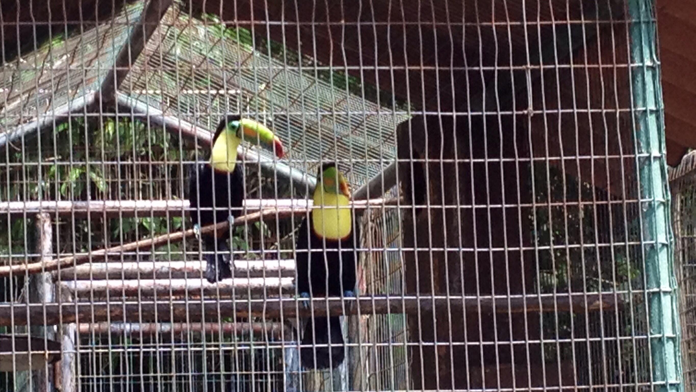 Die Tucane von Fruit-Loops
