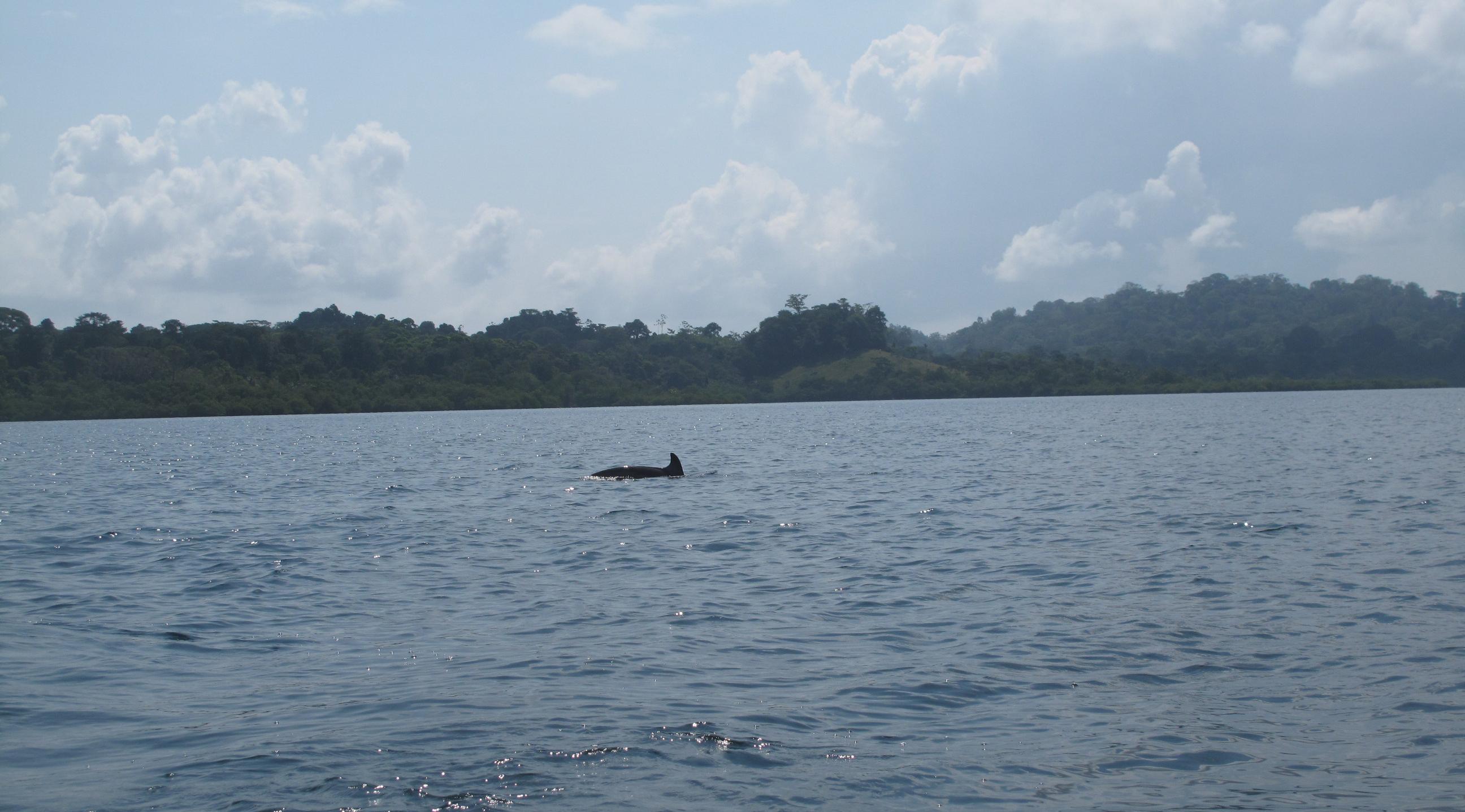Dolfin Bocas del Toro